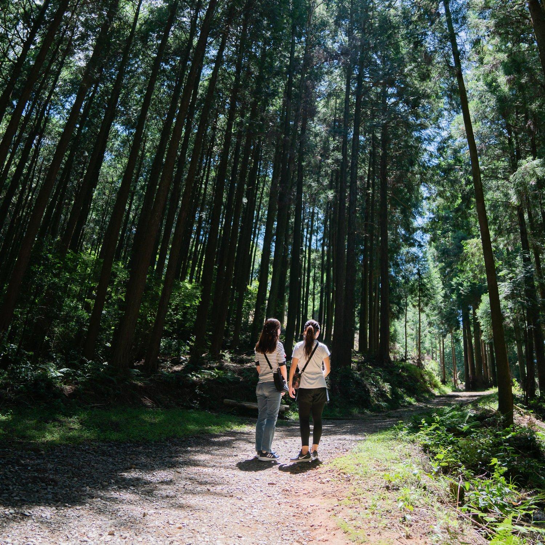 Ohirayama: discover Asakura through hiking